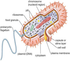 prokaryotic-cell-diagram1